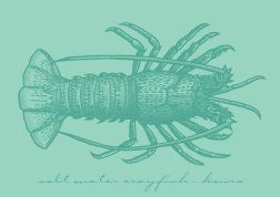 Saltwater crayfish - koura. Charcoal and ink on coquille board drawing.
