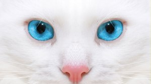 White KittyCat Rehoming image.