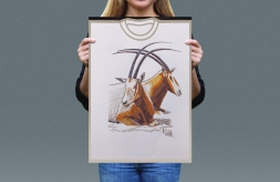 Visual presentation of Scimitar Horned Oryx T-shirt front