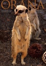 Wildlife Photo portrait of a pair of Meerkats at Orana Wildlife Park