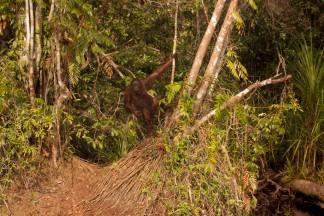 Mario_Orangutan-2091