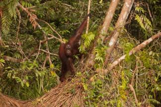 Mario_Orangutan-2101-2