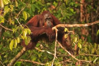 Mario_Orangutan-2114