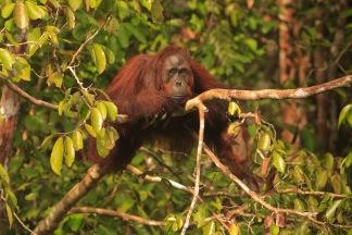 Mario_Orangutan-2116