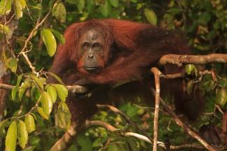 Mario_Orangutan-2130