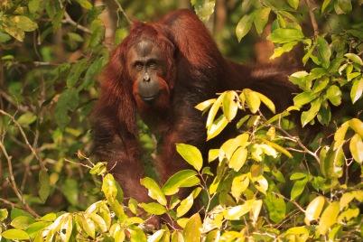 Mario_Orangutan-2141