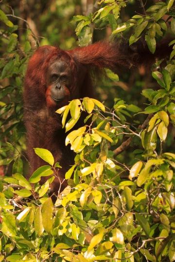 Mario_Orangutan-2147