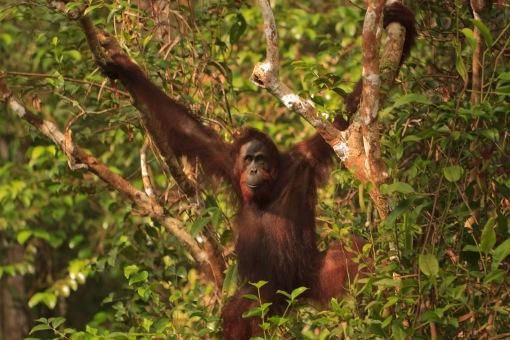 Mario_Orangutan-2154
