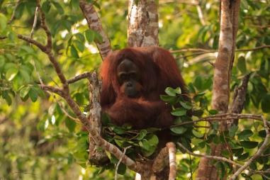 Mario_Orangutan-9779