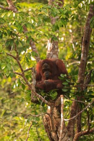 Mario_Orangutan-9781