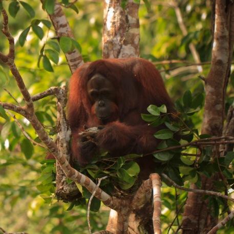 Mario_Orangutan-9782