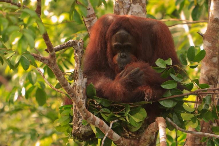 Mario_Orangutan-9784